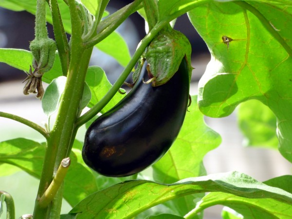 vegetable-2584412_1280