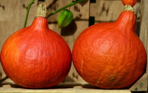 pumpkin-2691503_1280